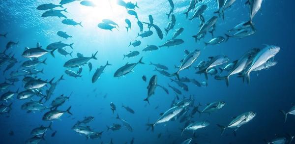 Hoe wordt viscollageen gemaakt?